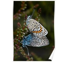 Silver studded Blues Poster