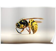 European Wasp Poster