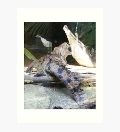 crocodiles...at Currumbin Sanctuary  (Queensland - Aust) Art Print