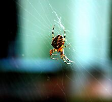 SPIDER by manendran