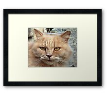 Watching my face? Framed Print