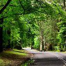 The Avenue near Breenhold - Mt Wilson NSW Australia by Bev Woodman