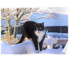 Snow Cat Poster