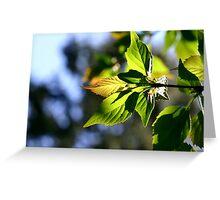 Lightful Autumn Greeting Card
