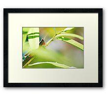 Peeking Hopper Framed Print