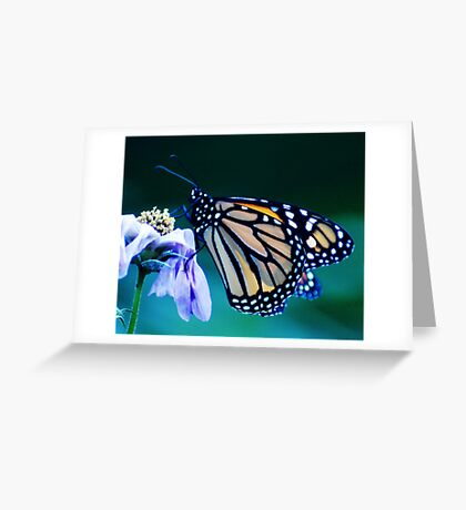 Multi-Colored Wings Greeting Card