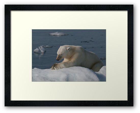 Bear Prayer by Steve Bulford