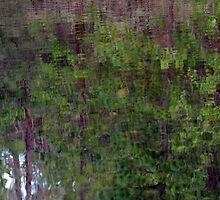 Forest in Water by bouldercreek