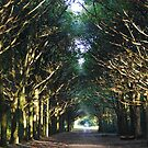 Avenue Of Light by Kathryn Considine