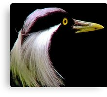 *DEMOISELLE CRANE* Canvas Print