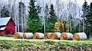 Harvest Time by Jo Nijenhuis
