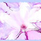 blue magnolia by budrfli