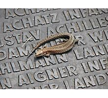 Lizard on War Memorial Photographic Print