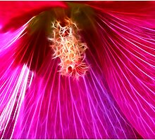 Pink Holly Beauty by Deborah  Benoit