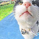 nosy feline by NordicBlackbird