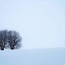 13.2.2015: Trees by Petri Volanen