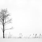 13.2.2015: Lonely Tree by Petri Volanen