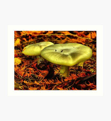 Fall Mushroom Art Print