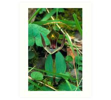 Stick Insect and Bird Orchid. Art Print