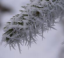 Needles of Frozen Fog by Jackie Muncy