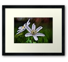 Anemone Art Framed Print