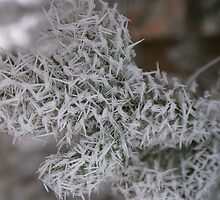 Long Icy Needles by Jackie Muncy