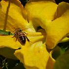 bee have by erattik