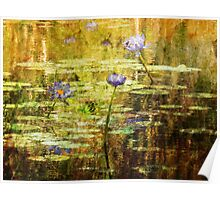 Textured Water Lilies Poster