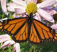 Butterfly Afternoon by Diane Trummer Sullivan