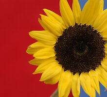 Primary Sunflower by Edson