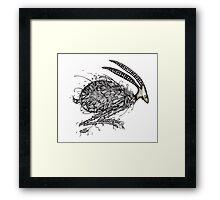 Hairy hare Framed Print