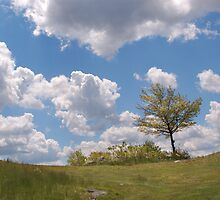Sunny Day on Blue Hills by Edson