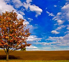 An Autumn Tree by deahna