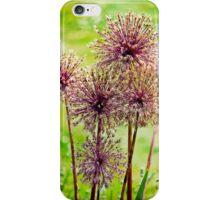 Allium flowers iPhone Case/Skin