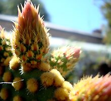 Cactus by elizabethrose05