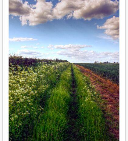 Rural Field Path Sticker