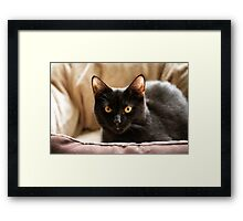 Black cat cosy in bed Framed Print