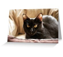 Black cat cosy in bed Greeting Card