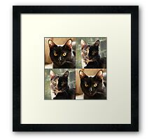 Black cat and Tortoiseshell cat  Framed Print