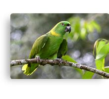 Green-naped Parrot - Costa Rica Canvas Print