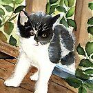 Target the Kitten by LinFrye