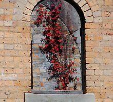 Gladesville Hospital - Window Vine by Bev Woodman