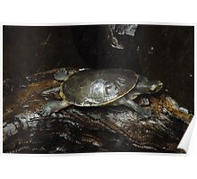 Yoga Turtle - Cobra Pose  Poster