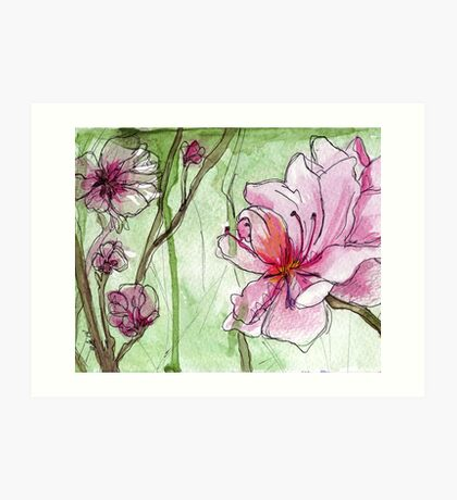 Apricot Blossoms - Pink Flowers in Watercolor Art Print