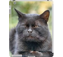 Stray old wise cat iPad Case/Skin