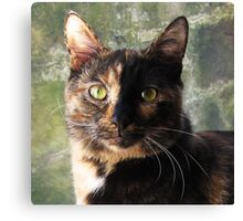 Tortoiseshell cat looking at camera Canvas Print