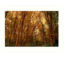 Autumn Woods... Art Print