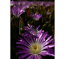 Pigface 5 Photographic Print