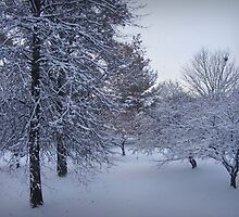 Snowy Trees in Early Evening by ashleykung