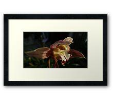 Orchid Portrait Framed Print